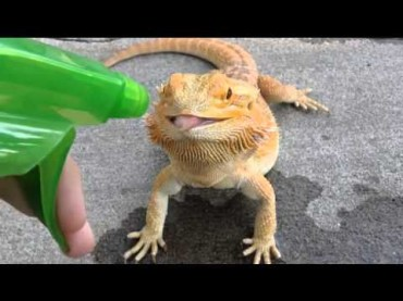 When Your Dragon Feels Thirsty Use a Water Gun