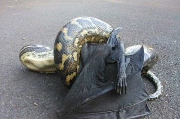 7 Wierd Tales About Snakes from Australia