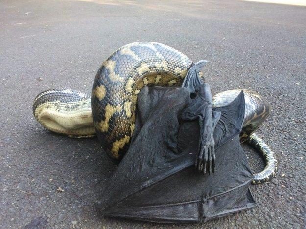 snake-tale-australia-1