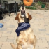 25 Catchy Food Adventures With Bandana Dog and His Master