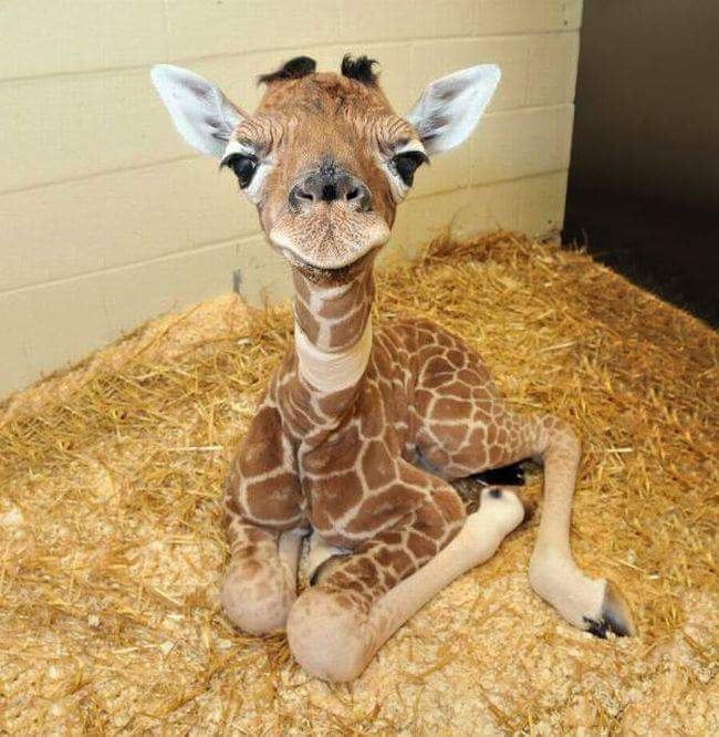 cute-baby-animal-4