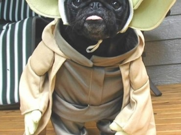 28 Pets Who Have the Best Star Wars Costumes