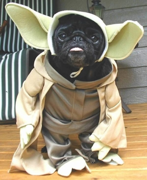 star-wars-animal-cosplay-20