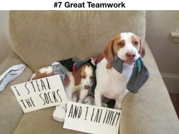 20 Adorable Pet Criminal Duos