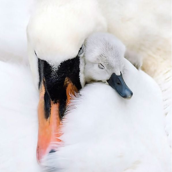 power-of-parental-love-3