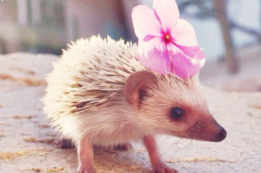 25 Pictures That Will Make You Fall In Love With Hedgehogs