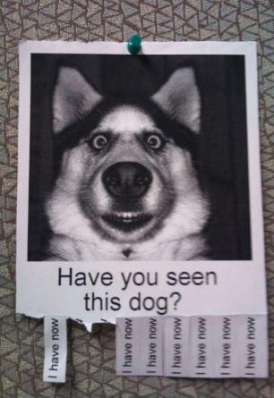 missing-pet-poster-16