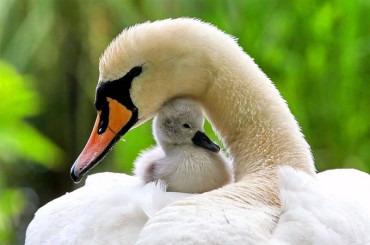 """20 """"I Love You Mom"""" Moments From The Animal World"""