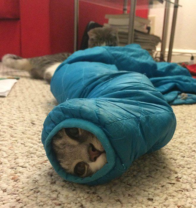 pets-are-stuck-20