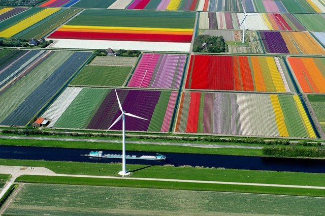 tulip-fields-the-netherlands