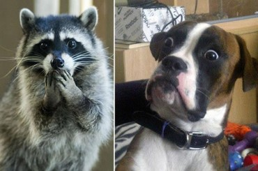 20 Animals That Clearly Saw Something They Shouldn't Have Seen