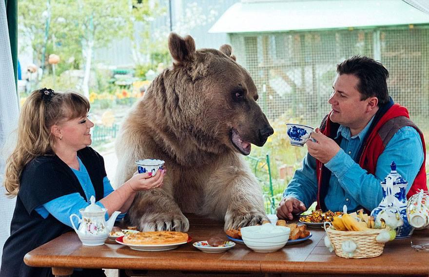 family-bear-1