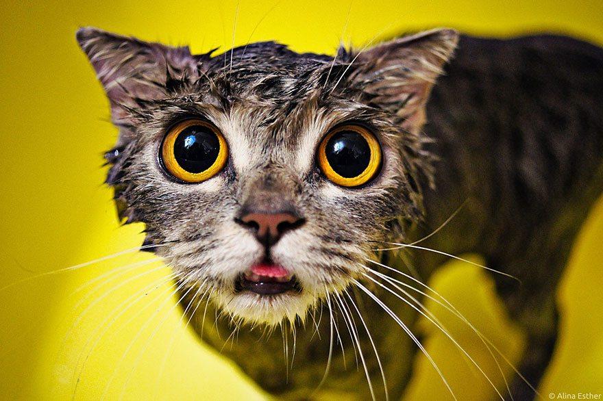 funny-wet-cat