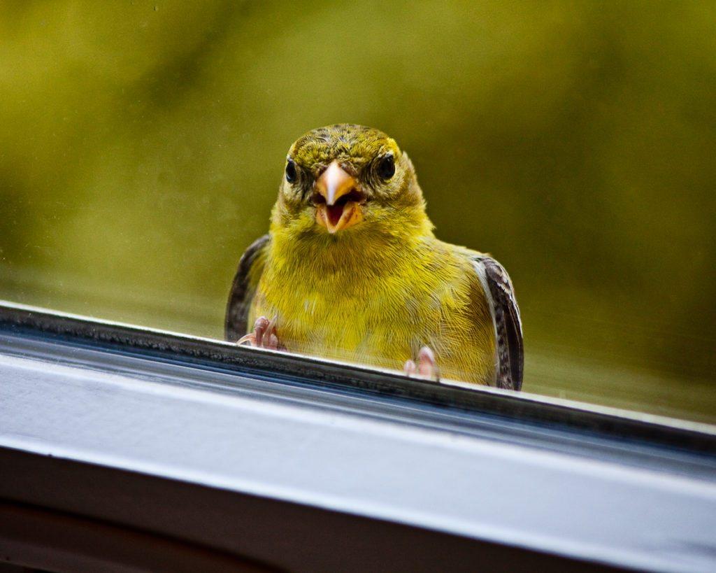 bird-and-window