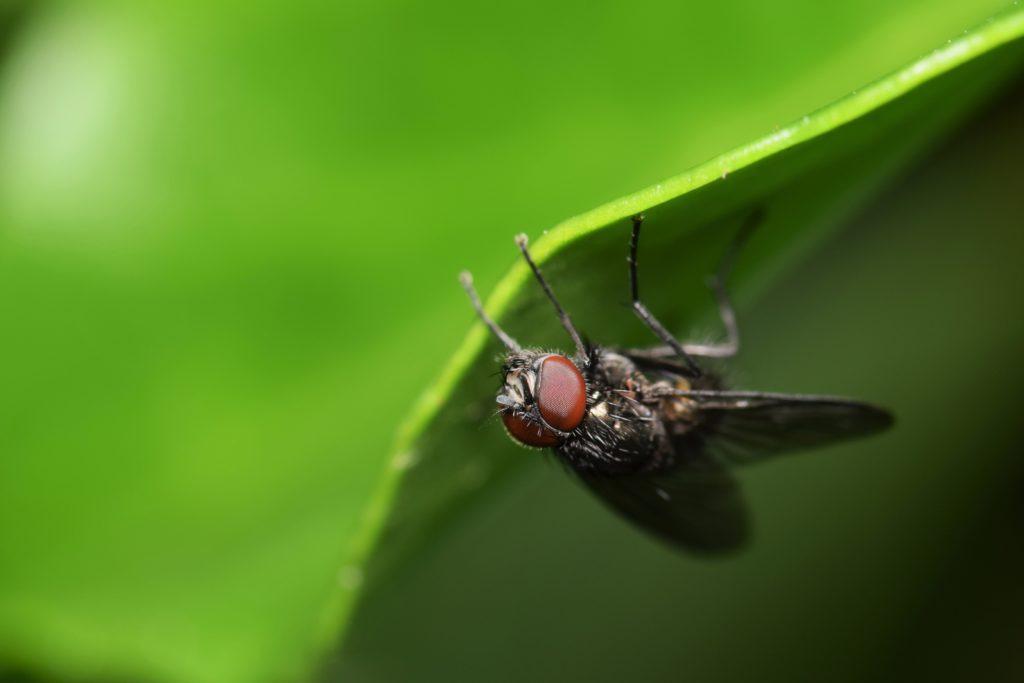 upside-down-fly