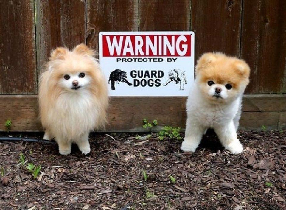 beware-of-dog-3