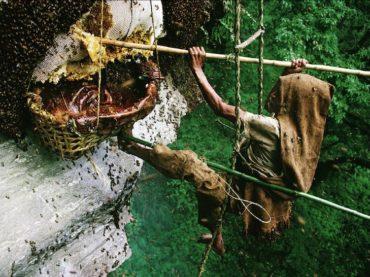 Honey Hunters – Nepal