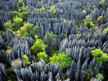 Stone Forest – Madagascar