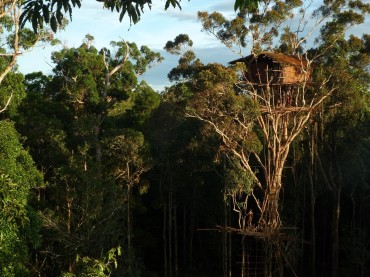Top of the Tree – Papua, Indonesian New Guinea