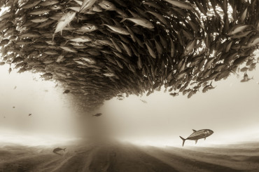 Top 20 Nominees From 2017 Sony World Photography Awards