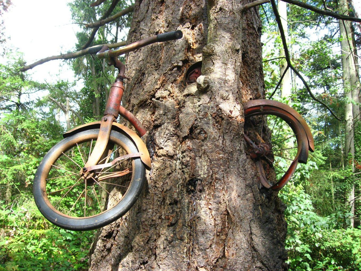 bicycle-tree