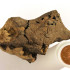 Dinosaur Brain Identified For First Time Ever