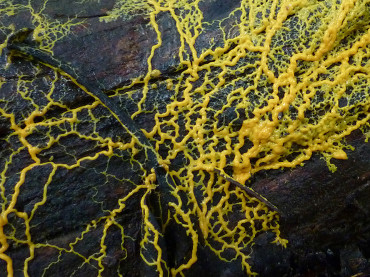 Slime Moulds Can Exchange Information