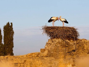 Birdwatching in Morocco