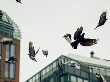 City Birds Have Upped the Volume of Their Songs to Compete With Noise Pollution