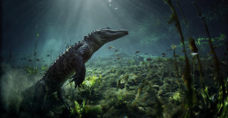 Florida Wetlands: Everglades National Park