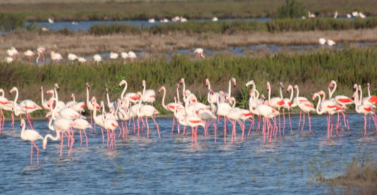 Flamingos in Andalusia