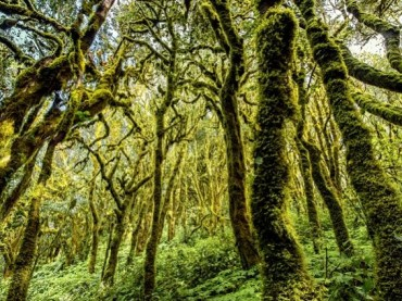 Canary Islands Cloudforest – Garajonay National Park