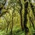 Canary Islands Cloudforest – Garajonay National Park