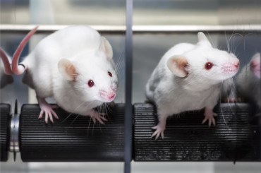 Healthy Mice Born From Lab-Grown Eggs