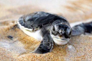 Turtles on Cape Verde