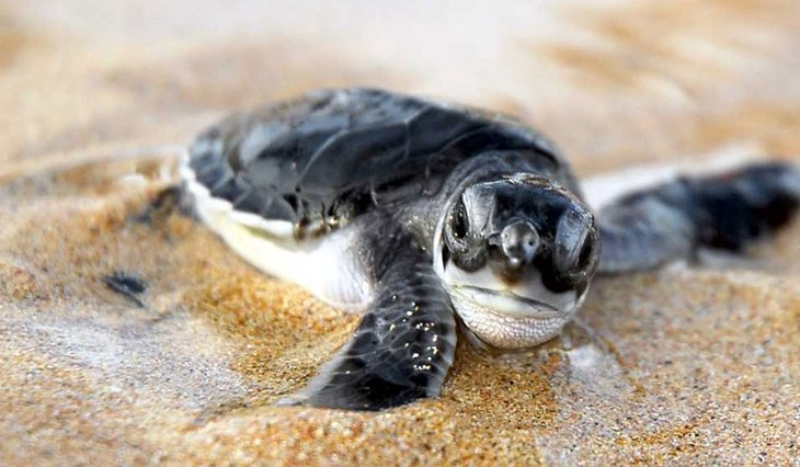 turtles-cape-verde-1