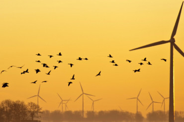 Are Wind Turbines a Danger to Bats?