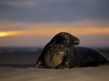 Seal Spotting – Donna Nook, Lincolnshire