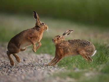 Hare Wonderland