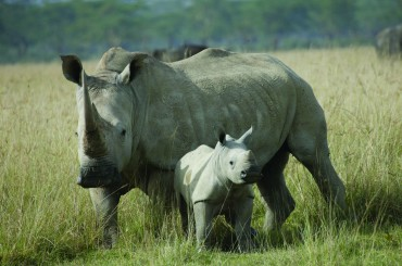 Did You Know? 6 Amazing Rhino Facts