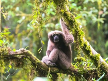 Galactic Gibbon