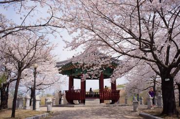 Petal Power in South Korea
