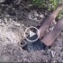 This Guy Puts His Bare Hands Into This Hole. You Can't Imagine What's Next…
