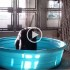 Zola The Gorilla From The Dallas Zoo Loves Splashing in The Pool