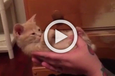 Kitten Falls Asleep So Hard It Can't Keep His Head Up