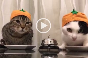 2 Cats With Good Manners