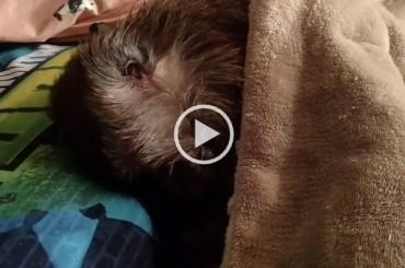 Sleepy Monkey Hates Morning Even More Than Us