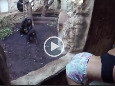 Funny Blonde Twerking In Front of A Chimpanzee Has a Little Surprise