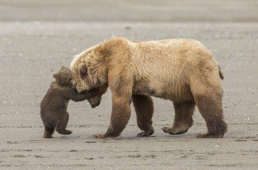Wildlife Photographer of the Year 2017 – 13 Photos