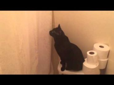 This Cat Changes Its Behavior When Hears Its Master Singing